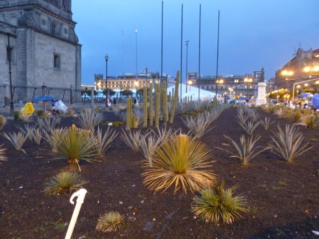 zocalo cactus mexico city