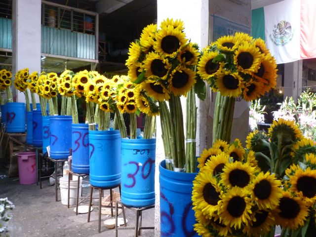 Mexico City Sunflowers