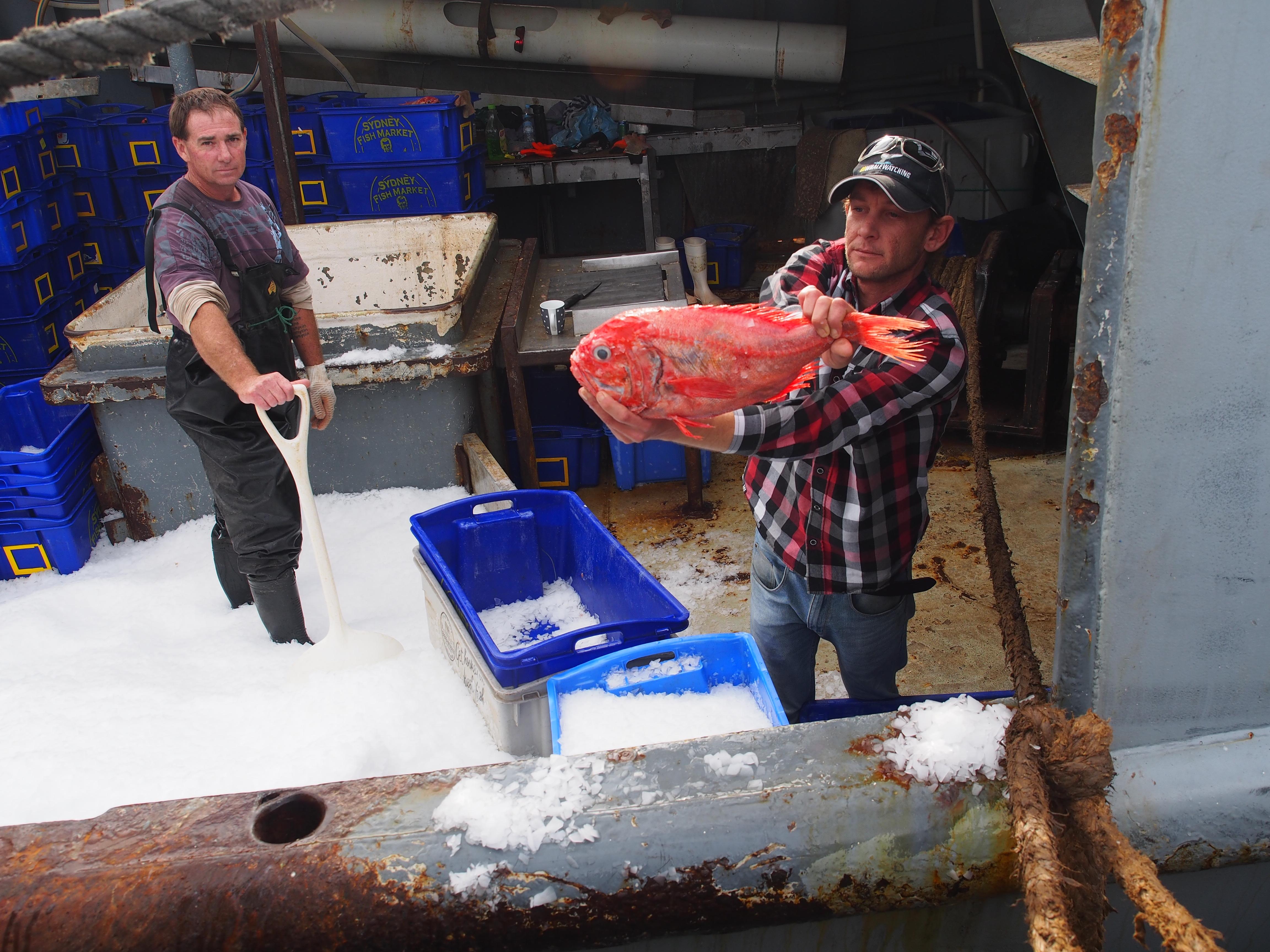Eden fisherman with orange roughie fish NSW