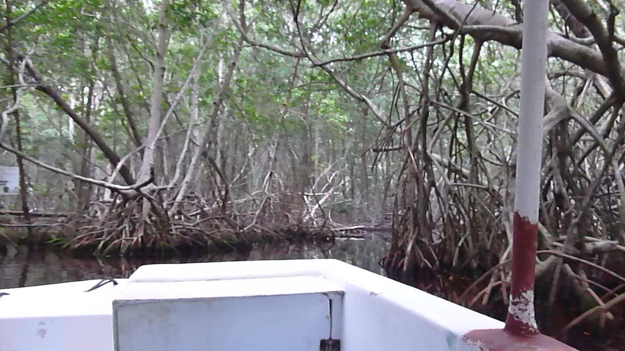 mangrove tunnel celestun mexico