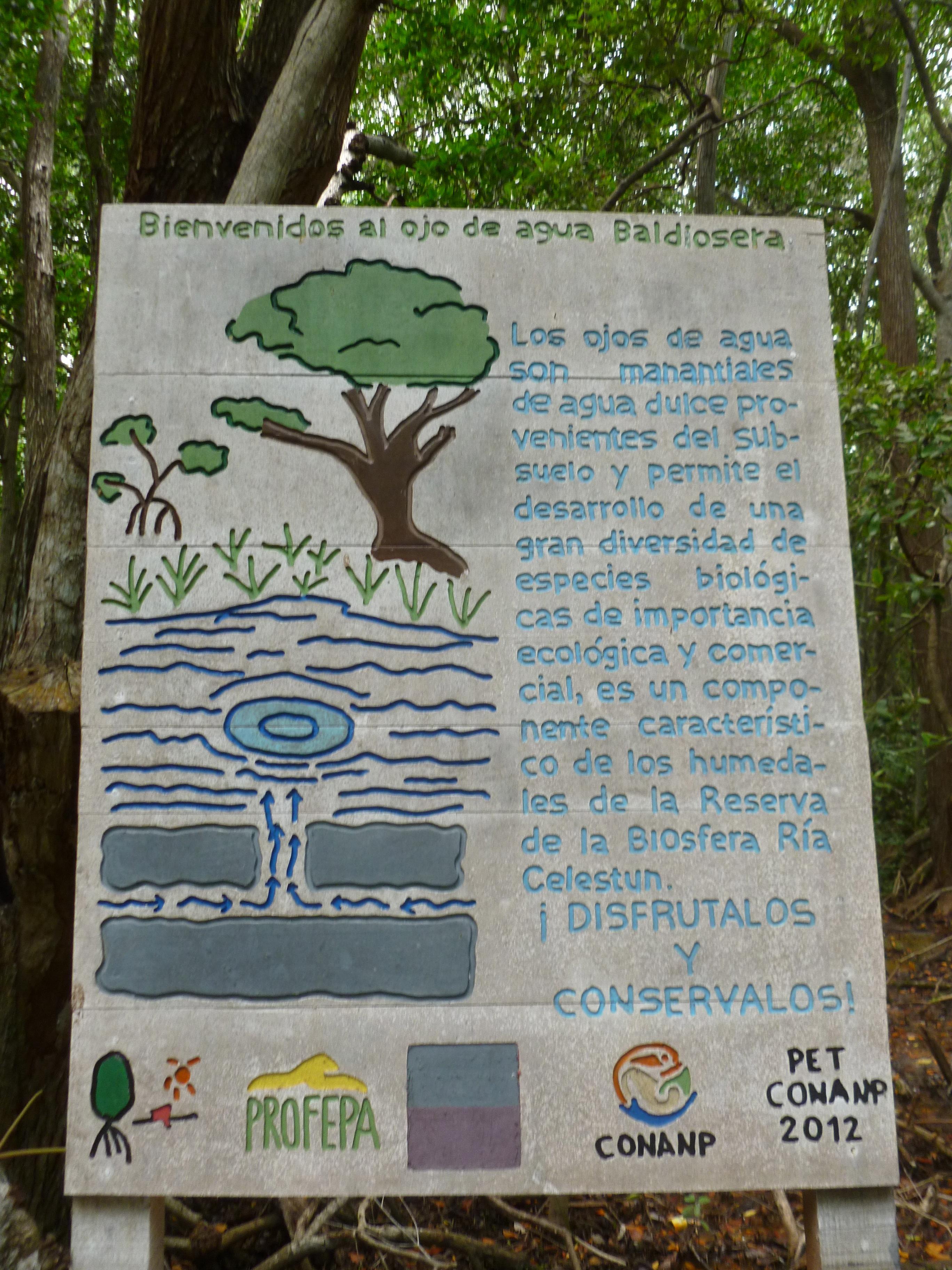 freshwater spring sign celestun Mexico