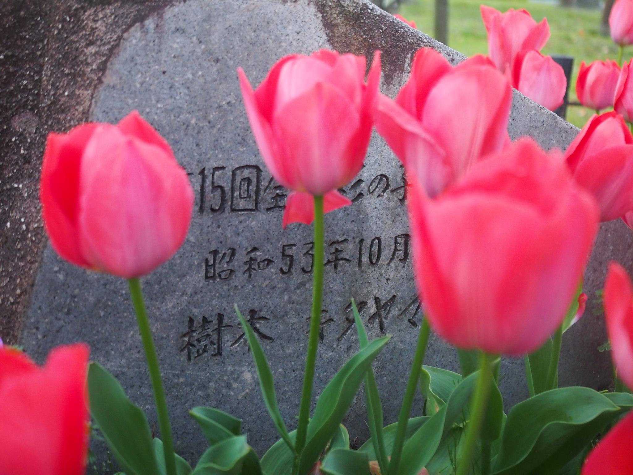 tulips hiroshima
