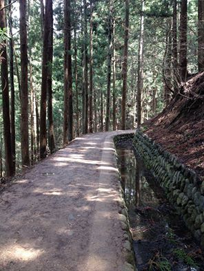 path in forest snow monkey park japan