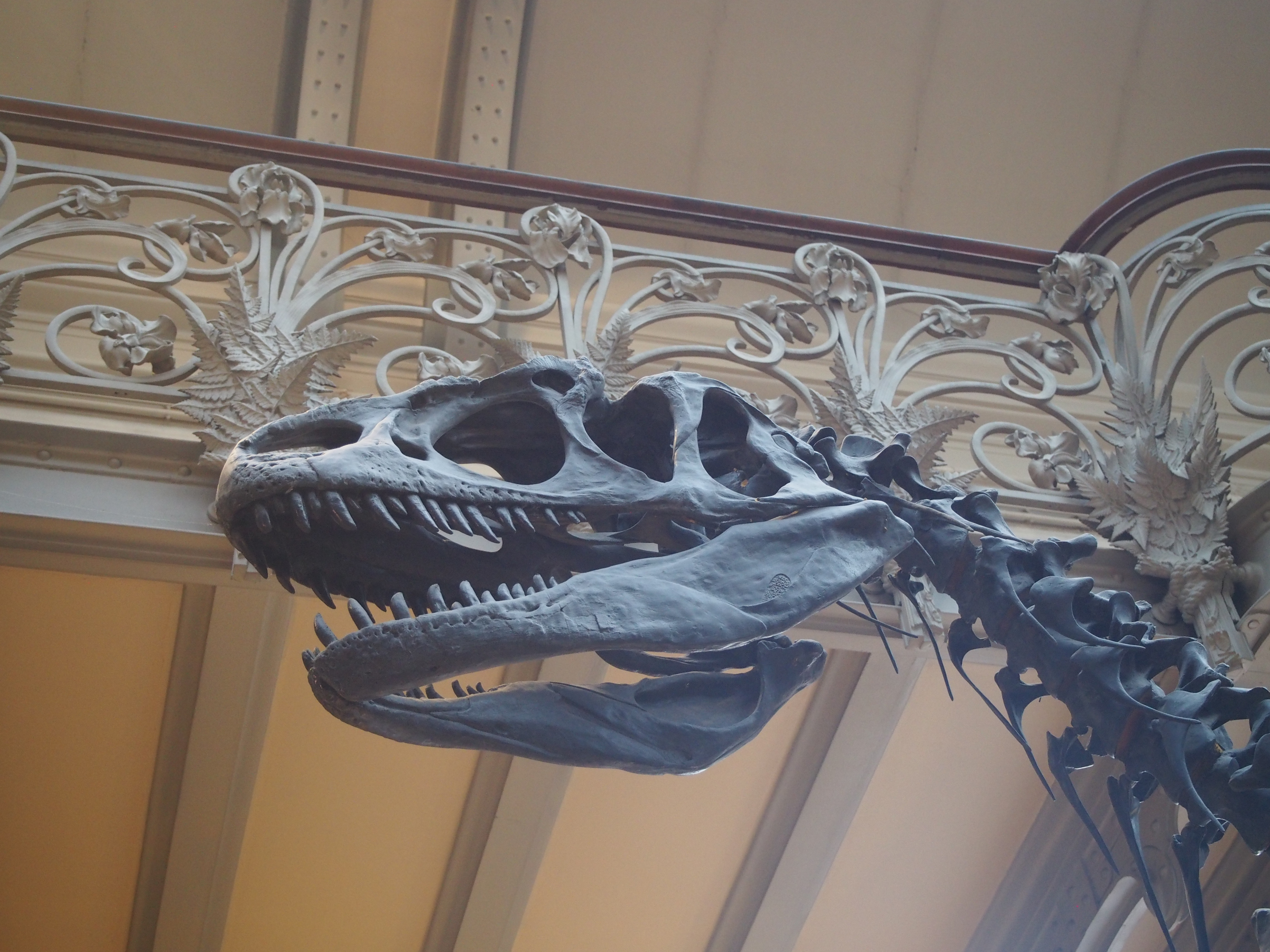 palaeontology museum Paris